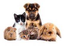 Stellen Sie Haustiere ein stockfotografie