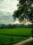 Stellen Sie im Sonnenuntergang auf lizenzfreie stockfotos
