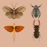 Stellen Sie Käfer ein Stockfotos