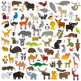 Stellen Sie Karikatur-Tiere aus der ganzen Welt ein Australien, Norden und Südamerika, Eurasien, Afrika lokalisierten auf weißem  Stockfotos