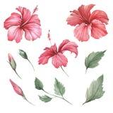 Stellen Sie mit Blumenhibiscus ein Aquarellillustration des Handabgehobenen betrages lizenzfreie abbildung