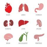 Stellen Sie mit Ikonen von menschlichen Organen ein Vektor Stockfotos