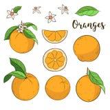 Stellen Sie mit Orangen ein Lizenzfreie Stockfotografie