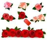 Stellen Sie mit schöne Rosen ein. realistischer Vektor Lizenzfreie Stockbilder
