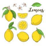 Stellen Sie mit Zitronen ein Stockfoto