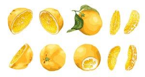 Stellen Sie mit Zitrusfrucht und Scheiben von verschiedenen Formen wie ha ein Stockfoto