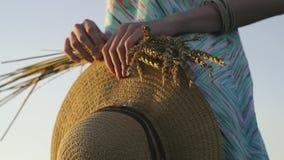 Stellen Sie Nahaufnahme von zwei Händen dar, die goldene Weizenspitzen und -strohhut auf Feld halten Rustikale Szene im Freien in stock footage