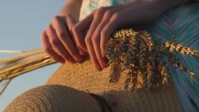 Stellen Sie Nahaufnahme von zwei Händen dar, die goldene Weizenspitzen und -strohhut auf Feld halten Rustikale Szene im Freien in stock video footage