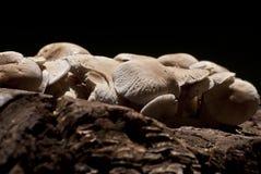 Stellen Sie Pilze ein Lizenzfreies Stockbild