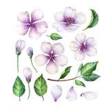 Stellen Sie, Sammlung Apple-Blumen, die Blumenblätter und Blätter, die auf weißem Hintergrund lokalisiert werden ein Stockfotografie