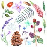 Stellen Sie, Sammlung mit den lokalisierten Aquarellwaldelementen ein (Beeren, Kegel, Lavendel, Wildflowers und Niederlassungen) lizenzfreie abbildung