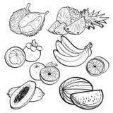 Stellen Sie Sammlungsgekritzel von tropischen Früchten auf weißem Hintergrund durch Vektorillustration ein Stockbild