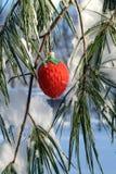 Stellen Sie sich rote Erdbeereweihnachtsverzierung in einer Kiefer vor Stockfotos