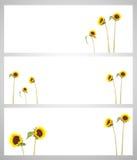 Stellen Sie Sonnenblume auf getrennt ein lizenzfreies stockbild