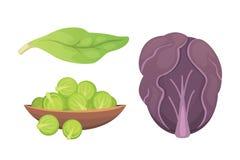 Stellen Sie Vektor Kohl und Kopfsalat ein Grüner Gemüsekohlrabi, andere verschiedene Kohlpflanzen Stockbild