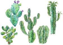 Stellen Sie vom Aquarellkaktus ein, saftig, Blumen natürliche Illustration lizenzfreie abbildung