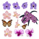Stellen Sie vom exotischen Blühen und schöne Orchideenblumen und botanische Anlagen ein, stilvolle Schmetterlingshanddie gezogene stock abbildung
