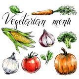 Stellen Sie vom Gemüse ein: gesunde Nahrung c für Gesundheitswesen und vegetarisches Menü Freihändiger Aquarellspinat, Karotte, M lizenzfreie abbildung