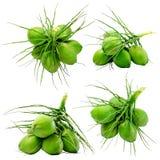 Stellen Sie vom grünen Kokosnussisolat an mit ein stockfotografie