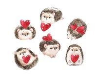 Stellen Sie vom Igelen, vom roten Herzen und vom Text ich liebe dich für St.-Valentinstag ein Weißer Hintergrund mit netter Aquar lizenzfreie abbildung