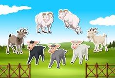 Stellen Sie vom Schaf- und Ziegenaufkleber ein vektor abbildung