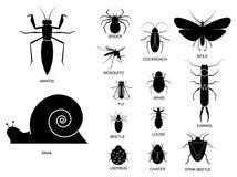stellen Sie vom verschiedenen Insekt im Schattenbild, mit Insektennamen ein vektor abbildung