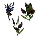 Stellen Sie von 3 Aquarellkrautblumensträußen ein stock abbildung
