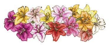 Stellen Sie von den hellen mehrfarbigen Lilienblumen ein, die auf weißem Hintergrund lokalisiert werden Hand gezeichneter Vektor  stockfoto