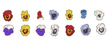 Stellen Sie von den hellen mehrfarbigen Stiefmütterchenblumen ein, die auf weißem Hintergrund lokalisiert werden Hand gezeichnete lizenzfreie stockfotografie