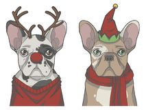 Stellen Sie von den Hunden der französischen Bulldogge ein, die herauf als Ren und Weihnachtselfe gekleidet werden lizenzfreie abbildung