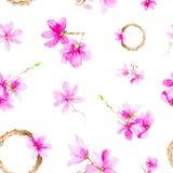 Stellen Sie von den Pflaumenblumen, -zweigen und -Kranz ein Aquarellillustration lokalisiert auf wei?em Hintergrund Nahtloses Mus stockfotografie