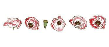 Stellen Sie von den schönen Mohnblumenblumen ein, die auf weißem Hintergrund lokalisiert werden Hand gezeichneter Vektor Naturblu stockbild