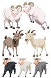 Stellen Sie von den Ziegen und von den Schafen ein stock abbildung