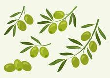Stellen Sie von der grünen Olive, Niederlassungsoliven ein Vektor lizenzfreie abbildung