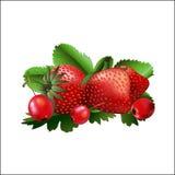 Stellen Sie von der roten Erdbeere und von einem Weißdorn ein Stockfoto