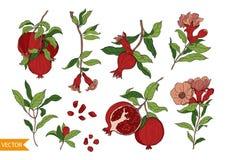 Stellen Sie von 10 Granatapfelelementen, -blumen und -blättern ein Handgezogene Fruchtart Vektor stock abbildung