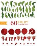 Stellen Sie von 60 Granatapfelelementen, -blumen und -blättern ein Handgezogene Fruchtart Vektor vektor abbildung