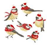 Stellen Sie von lustigen realistischen Vektor Meisen und von der Vogelzufuhr auf weißem Hintergrund ein Vektor-Weihnachtsbild Für vektor abbildung