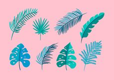 Stellen Sie von Vektor lokalisierter flacher Blattpalme ein, exotisch auf rosa Hintergrund Gezogene tropische Natur des Sommers s vektor abbildung