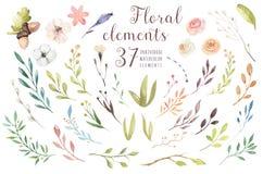 Stellen Sie Weinleseaquarell-Grünelemente von Blumen, Garten ein und wilde Blumen, Blätter, Niederlassungen blüht, Illustration Stockfoto