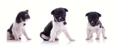 3 stellen van leuk puppy Royalty-vrije Stock Afbeelding