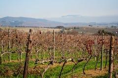 Stellenbosch immagine stock