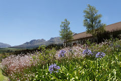 Stellenbosch Country House Royalty Free Stock Photo