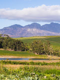 Stellenbosch Royalty Free Stock Image