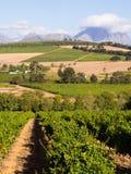 Stellenbosch Stock Images
