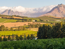 Stellenbosch Royalty Free Stock Photography
