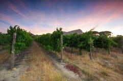 Stellenbosch, le coeur de la région viticole dans Afri du sud image libre de droits