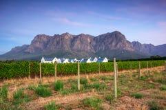 Stellenbosch, le coeur de la région viticole dans Afri du sud photo stock