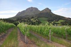 Stellenbosch mountain winelands Cape stock photo