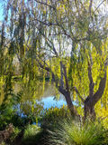 Stellenbosch, Południowa Afryka zdjęcie royalty free